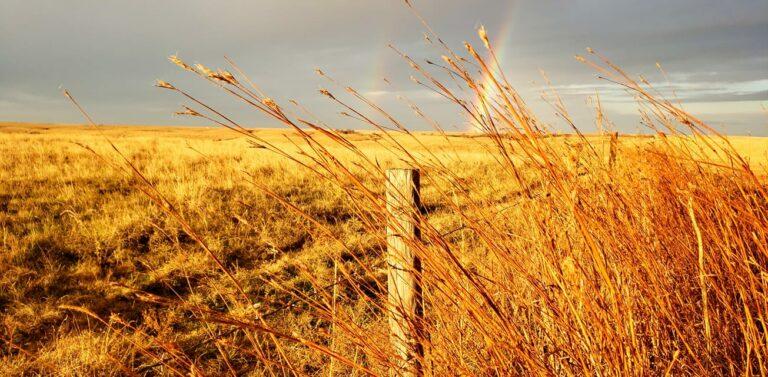 Samford Wheat Field